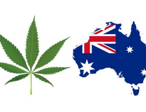 Medical Cannabis Trials Set In Australia