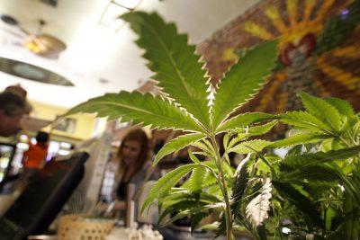 blog_CannabisPatients