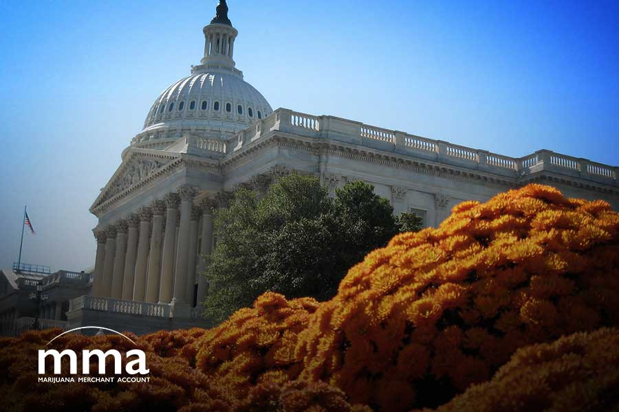 senate hearing congress marijuana banking