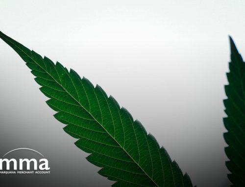 Schumer: Marijuana Legalization Must Pass Before Cannabis Banking Reform