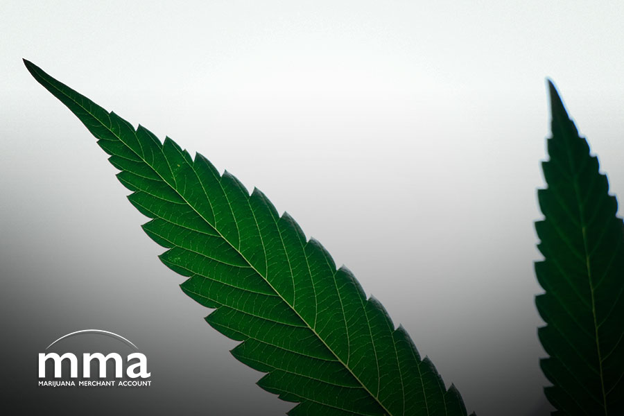 federal cannabis legalization must come before banking reform